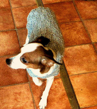 Little lerrier wearing her sweater - more at Pugcentric Pursuits Needlework Blog