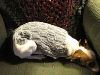 Little dog wearing knit capelet at Pugcentric Pursuits needlework blog